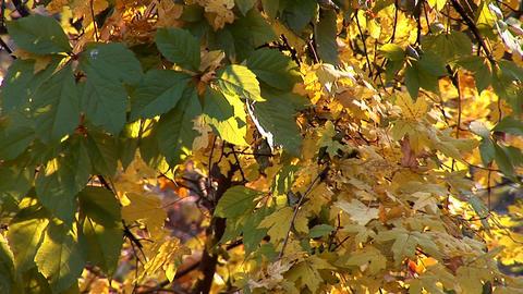 autumn 19 Stock Video Footage