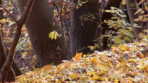 autumn 21 Stock Video Footage