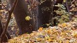 autumn 21 Footage