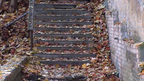 autumn 25 Stock Video Footage