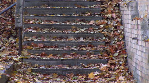 autumn 25 Footage