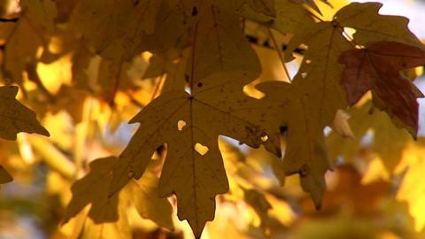 autumn 27 Stock Video Footage