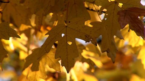 autumn 27 Footage