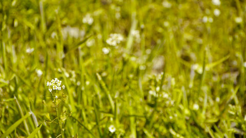 Beautiful wild flowers in grass Stock Video Footage