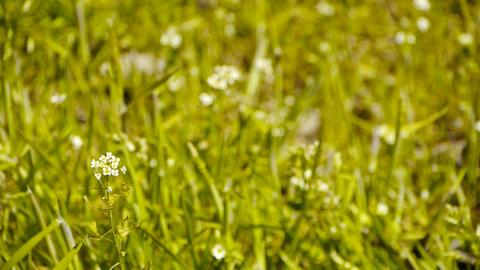 Beautiful wild flowers in grass Footage