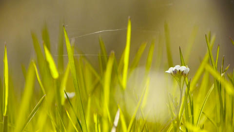 Beautiful wild flowers in grass,Cobwebs spiders Stock Video Footage