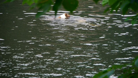 people and dog swimming in lake water Stock Video Footage