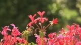 flowers su Footage