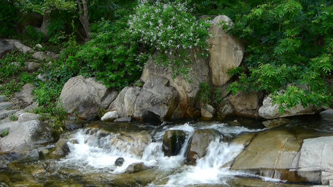 Mountain waterfall stream,forests & shrubs Stock Video Footage