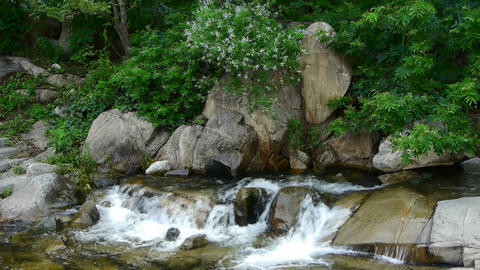 Mountain waterfall stream,forests & shrubs Footage