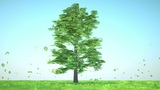 Luck: Abstract Clover Tree Sticks Into Green Glade With Flowers stock footage