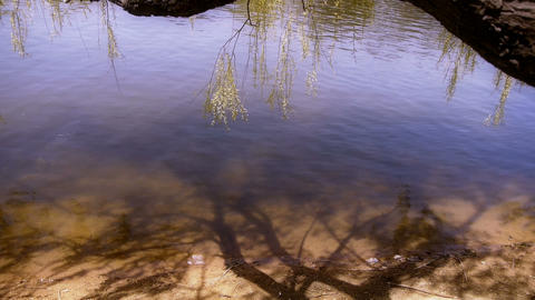 Willow's shadow reflection in sparkling water Stock Video Footage