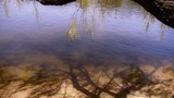 Willow's Shadow Reflection In Sparkling Water stock footage