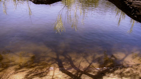 Willow's shadow reflection in sparkling water Footage