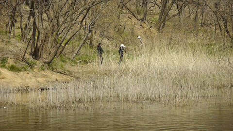 river reeds in wind,shaking wilderness,tourists,picnickers Stock Video Footage