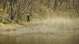 river reeds in wind,shaking wilderness,tourists,picnickers Footage