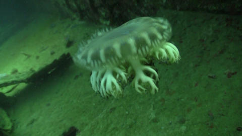 Beautiful jellyfish floating among the wreckage ship in... Stock Video Footage