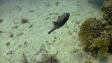 Colorful Fish on Coral Reef, Red sea Footage
