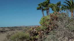 Spain The Canary Islands Gran Canary 015 palm trees at border of dunes Footage