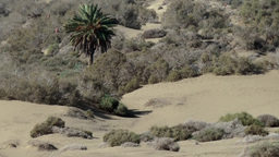 Spain The Canary Islands Gran Canary 013 single persons in the dunes Footage