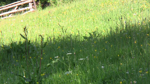 Looking over the green expanse of meadows with yellow flowers surrounded by fore Footage