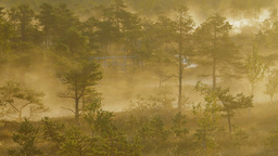 Mist rising from a wetland forest Footage