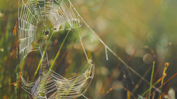 Spider in a web almost catching a pray Footage