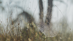 Spider in a web in grasslands Footage