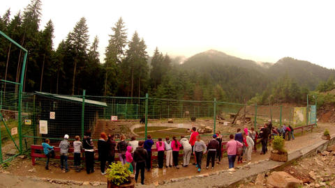 many children are looking at the brown bears in a large aviary with pool Footage
