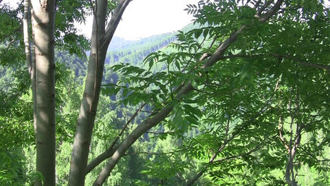Looking through the branches of a tree toward nearby mountains and forests 32 Footage