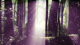 4 K Sun Shines through Leaves in Mysterious Deep Forest 1 magic fireflies Footage