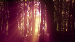 4 K Sun Shines through Leaves in Mysterious Deep Forest 10 Live Action