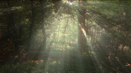 4 K Sun Shines through Leaves in Mysterious Deep Forest 12 Live Action