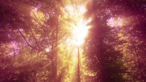 4 K Sun Shines through Leaves in Mysterious Deep Forest 14 Stock Video Footage