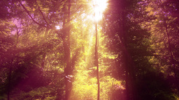 4 K Sun Shines through Leaves in Mysterious Deep Forest 14 Live Action