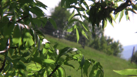 Green meadow with flowers, seen through the foliage of a tree 37 Footage