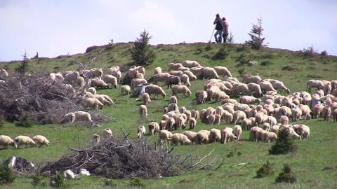 Two shepherds supported in sticks and sheep grazing grass 14 Footage