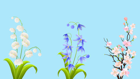 White Lily Of The Valley, Blue Bluebell and Pink Sakura Animation with Alpha Cha CG動画素材