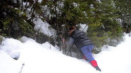Forestry worker with an ax that cuts a tree in the forest covered by snow 29 Footage