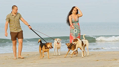 Guy Girl Walk with Dogs on Sand Beach Play by Ocean Surf Footage
