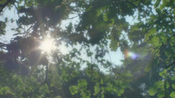Hopeful Sunlight through Leaves Footage