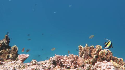 珊瑚と青01 Footage
