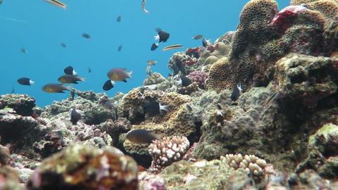 珊瑚と青04 Footage