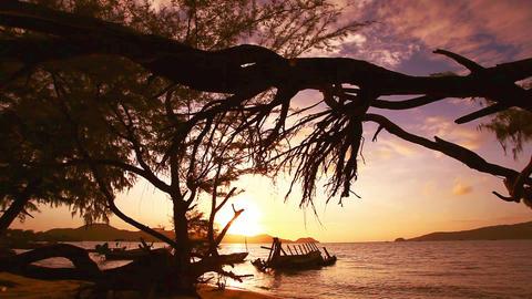 The sun shines through the pine tree Footage