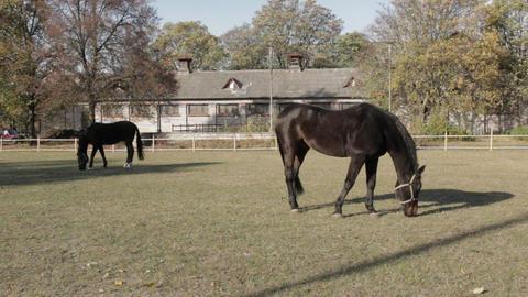 Black Velvet Horses Footage