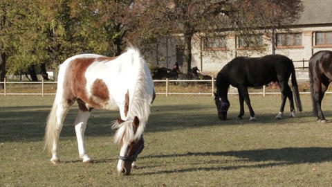 Funny Horses Footage