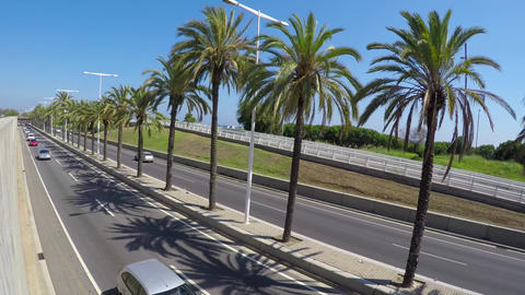 Palm Tree Highway Semi Dutch Angle Footage