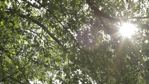 Sun shining through the leaves Footage