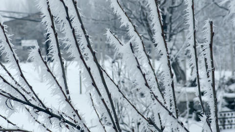 Frosted Branches in Winter Footage