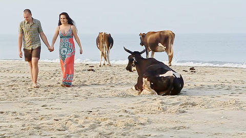Guy Girl Squat on Sand Beach Watch Close Cows by Ocean Surf Footage